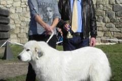 2013_Klubová a speciální výstava Klubu pyrenejských plemen