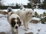 2015_Roxy a Freen_zimní radovánky