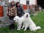 Roxy a Andy - krytí březen 2012